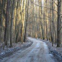 Морозный солнечный денек...2.12.14. :: novik Юрий Новиков