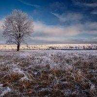 Одиноко в поле... :: Roman Lunin