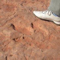 А не такая и большая нога у динозавра! :: Владимир Смольников