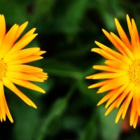 Два солнца :: Damir Si