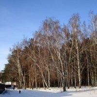 Зимушка- зима . :: Мила Бовкун
