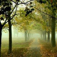 Осень туманная :: Oleg Ustinov
