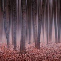Сказочный лес :: Максим Дорофеев