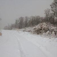 Снежной дорогой :: Тая Лемур