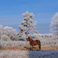 Паслась лошадка на морозе, Жевала мёрзлую траву..... :: Анатолий Клепешнёв