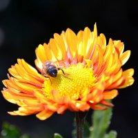 Осенний цветок :: Ольга Голубева