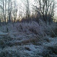 Трава в зимнем инее :: BoxerMak Mak