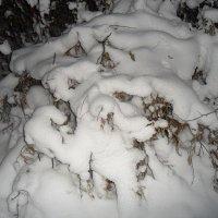 И мороз в таких шубах не страшен! :: Наталья