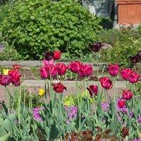 Цветение в монастырском саду. :: Геннадий Александрович