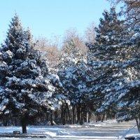 Бал в зимнем парке... :: Тамара (st.tamara)