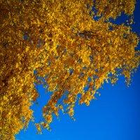 Осень золотая :: Irina Schneider