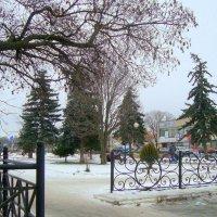 ёлок много, снега мало... :: Галина Филоросс