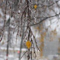 Внезапная зима :: Наталья Вадимовна