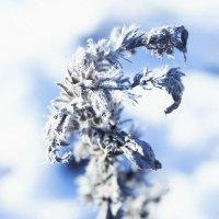 Зима :: Вадим Иванюк