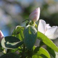 цветок :: natasha plugnikova