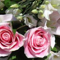 Розовые розы :: Людмила