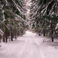 лыжная трасса в Подгородке :: Павел Павел