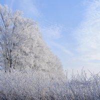 Мороз в хрустальные наряды, Природу всю одел в округе... :: Анатолий Клепешнёв