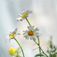Маленькое чудо в зелени травы :: Ирина Данилова