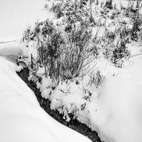 Последний снег :: Yuri Silin