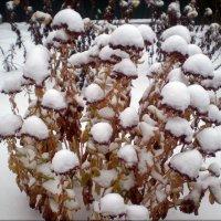 Снежный букет :: Татьяна Пальчикова