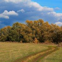 Уж небо осенью дышало... :: Эркин Ташматов