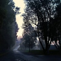 Туманное утро после дождя. :: Владимир Михайлович Дадочкин