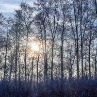 Морозный  солнечный денёк Всем поднимает настроение.... :: Анатолий Клепешнёв