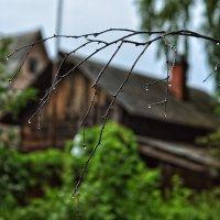 Теперь мой попутчик- старенький зонт :: Ирина Данилова
