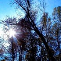 Осенний лес :: оксана