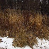 IMG_6883 - Зимние травы :: Андрей Лукьянов