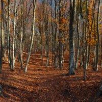 Осенняя сказка :: Alexander Samofalov