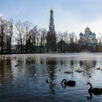 Лебединое озеро :: Владимир Воробьев