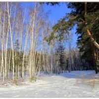 Зимний пейзаж . :: Мила Бовкун