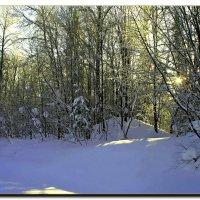 Сказка зимнего леса. :: Любовь Чунарёва