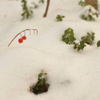 Зима снежком укутала ...... :: Сергей Воронков