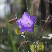 Цветок :: Александр Робинович