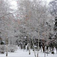 Первый день зимы в парке... :: Тамара (st.tamara)