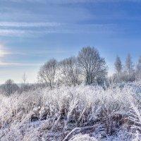 Холодное зимнее солнце.... :: Анатолий Клепешнёв