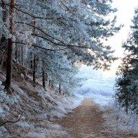 Дыша морозной тишиной... :: Лесо-Вед (Баранов)
