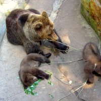 Мишкино семейство :: Сергей Карачин