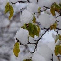 Первый день зимы :: Олег Плотников