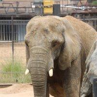 Слоны такие жалкие :: Savayr