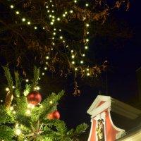 Рождественская пора в Зосте :: Viktorija Prikule