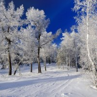 Мороз - морозище! :: Сергей Адигамов