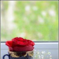 один день из жизни розы :: Юлия