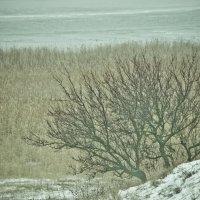 Зимняя пора :: Виктория Мацук