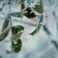 зима :: олеся тронько