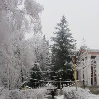 Ель под снегом :: Oksana KU