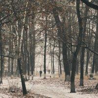 парк :: Светлана Грачева